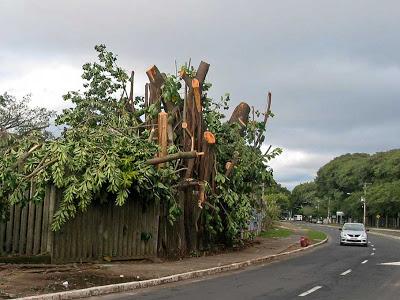 Árvores cortadas para duplicação da Avenida Loureiro da Silva, mas ciclovia será sobre a calçada.